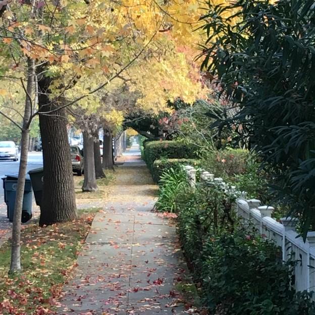 Palo Alto - Fall