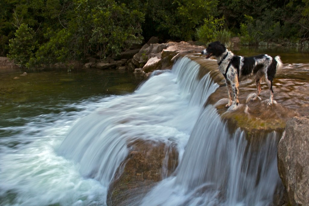 barton creek with dog